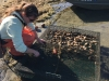 Counting oysters live versus dead in bottom rack